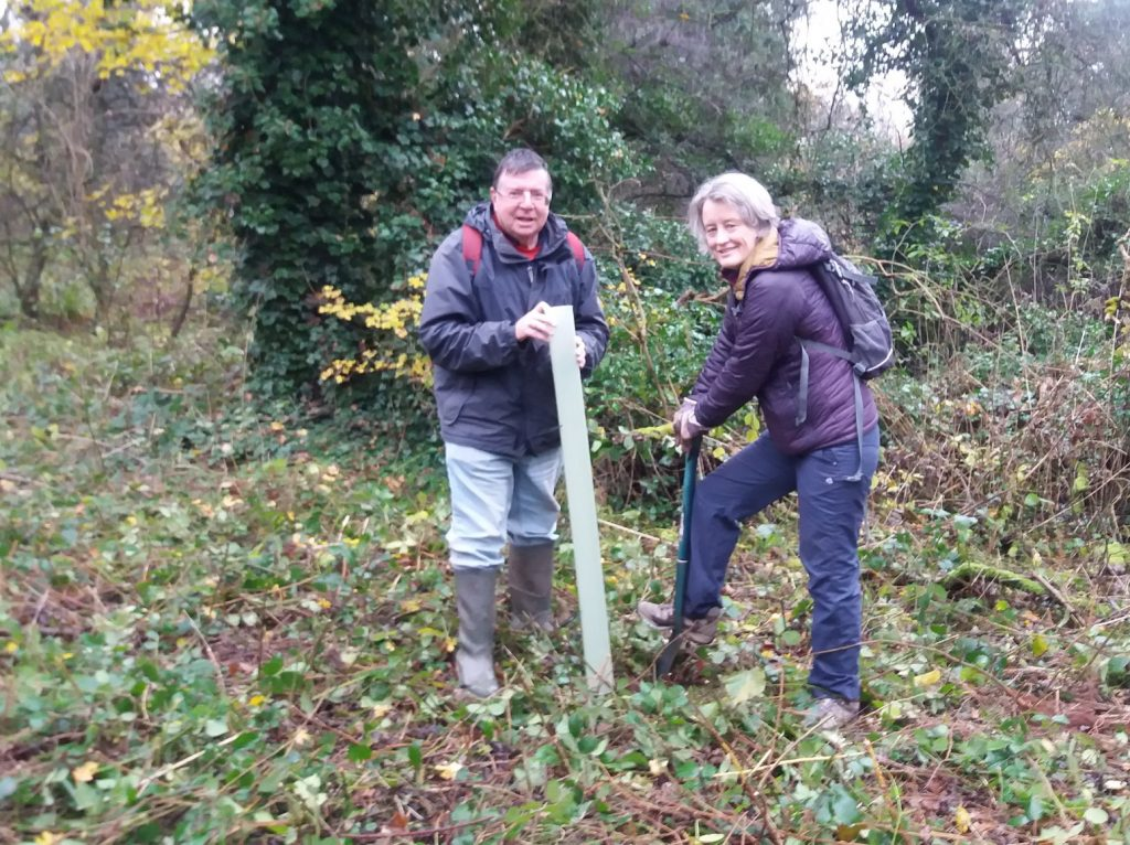 Volunteers planting trees to replace those that will be lost to Ash Dieback Disease.